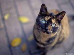Funny-Cats-cats-9473445-1600-1200
