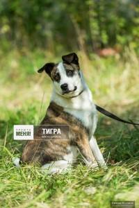 Тигра  Благотворительный фонд пом